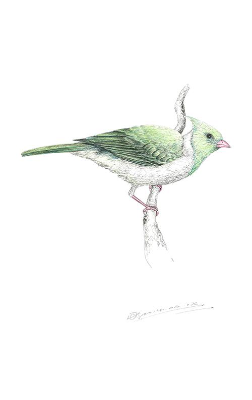 Birds Ⅳ