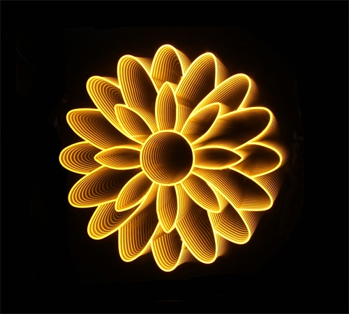 Flowers on Light I