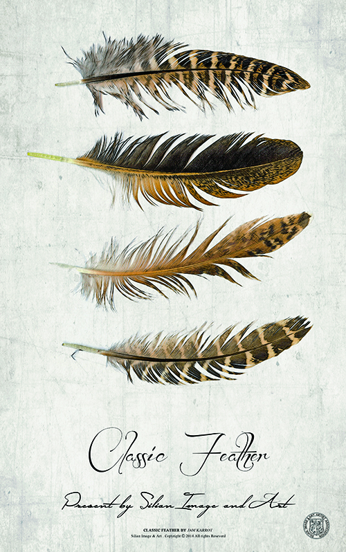 Classic Feather VII
