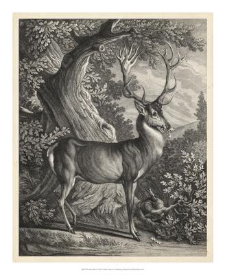 Woodland Deer I