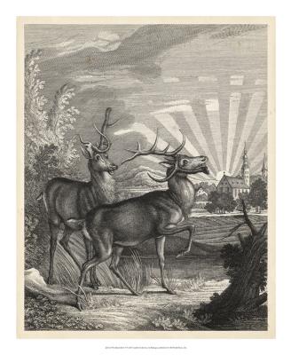 Woodland Deer V