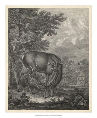 Woodland Deer IV