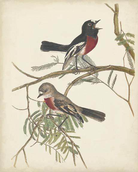Graceful Birds IV