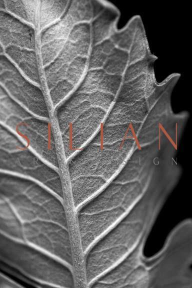 Striking Leaf II