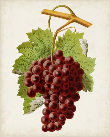 Antique Fruit III