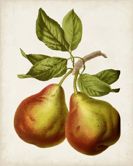 Antique Fruit XI