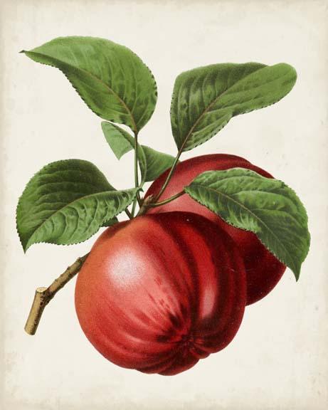Antique Fruit X