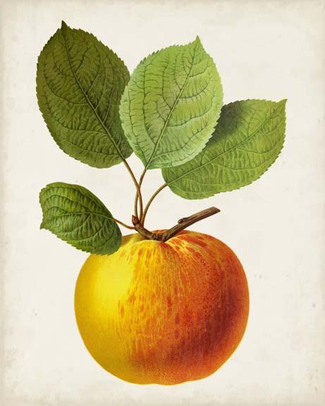 Antique Fruit I