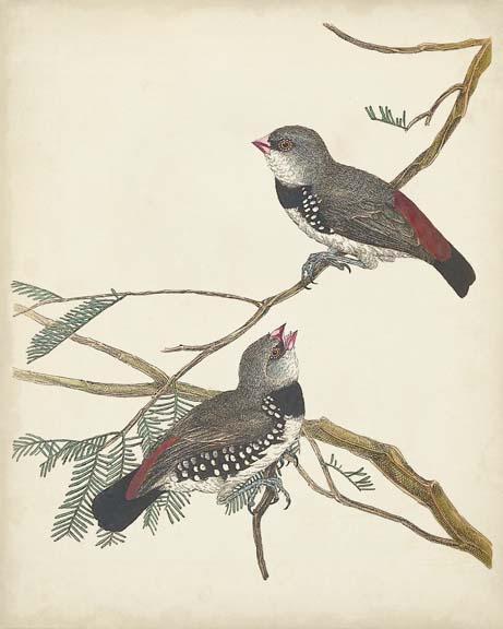 Graceful Birds I