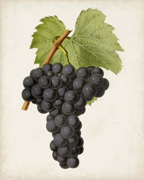 Antique Fruit VIII