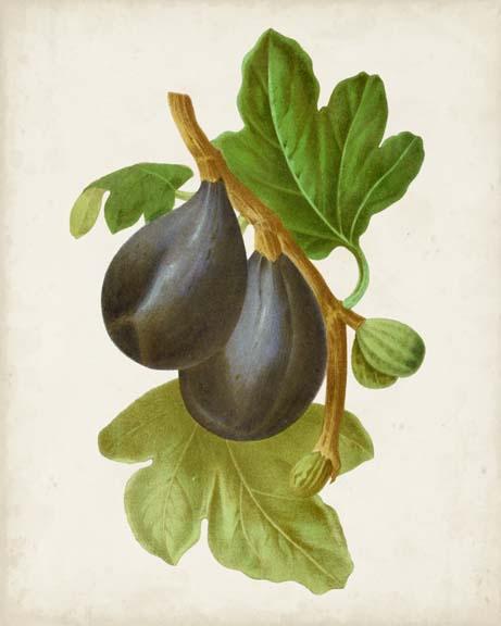Antique Fruit VI