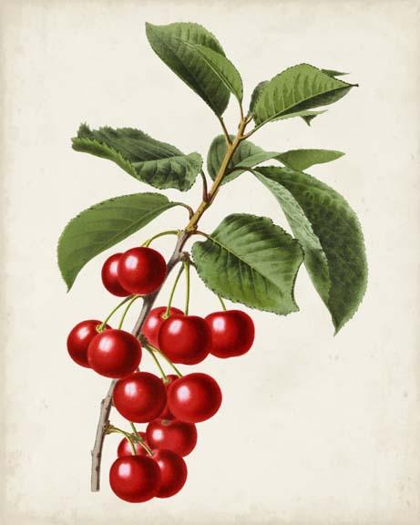 Antique Fruit II