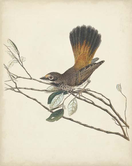 Graceful Birds II