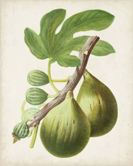 Antique Fruit IV