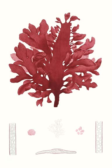 Striking Seaweed I