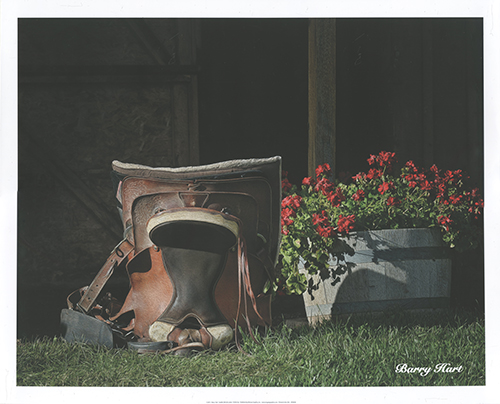 Saddle Still Life (color)