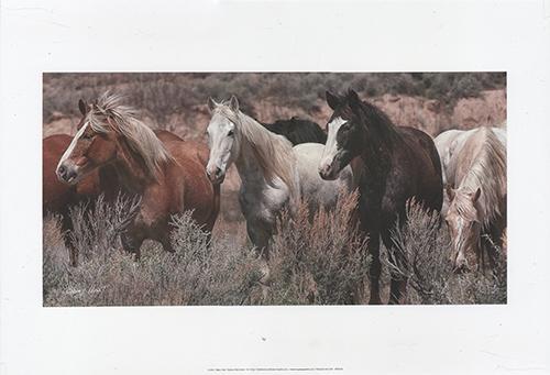 Pasture Pals (color)