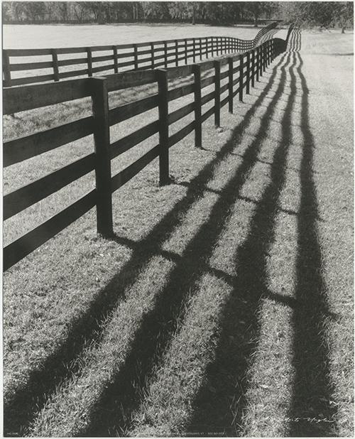 Fences and Shadows, Florida