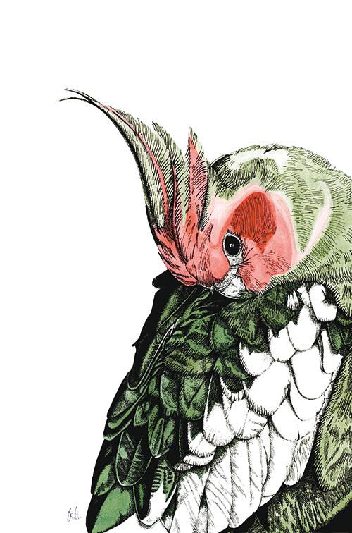 Tropical Parrot Ⅰ
