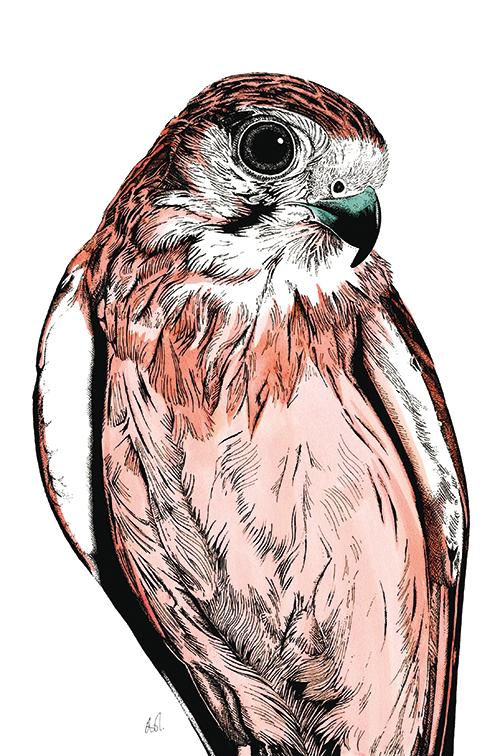 Tropical Parrot Ⅲ