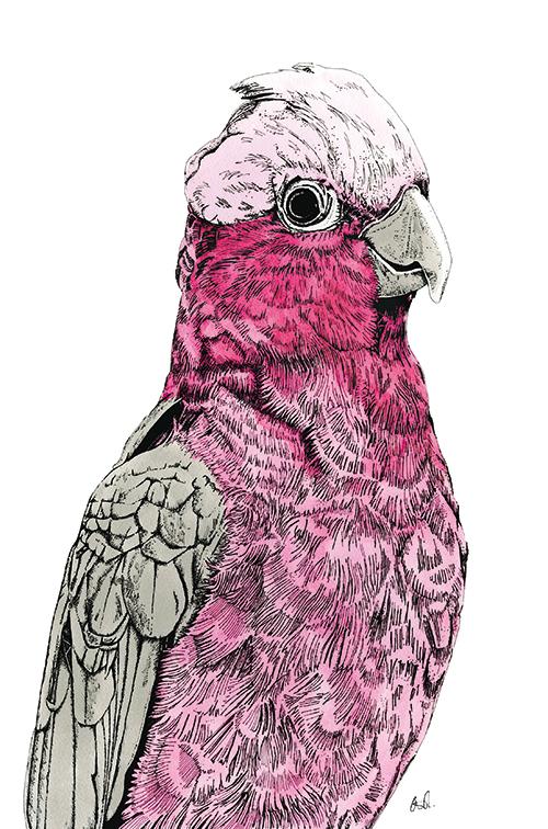 Tropical Parrot Ⅴ
