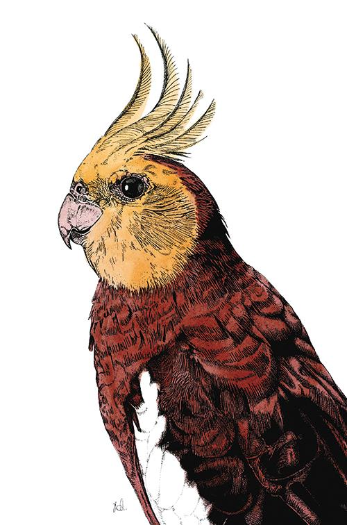 Tropical Parrot Ⅱ