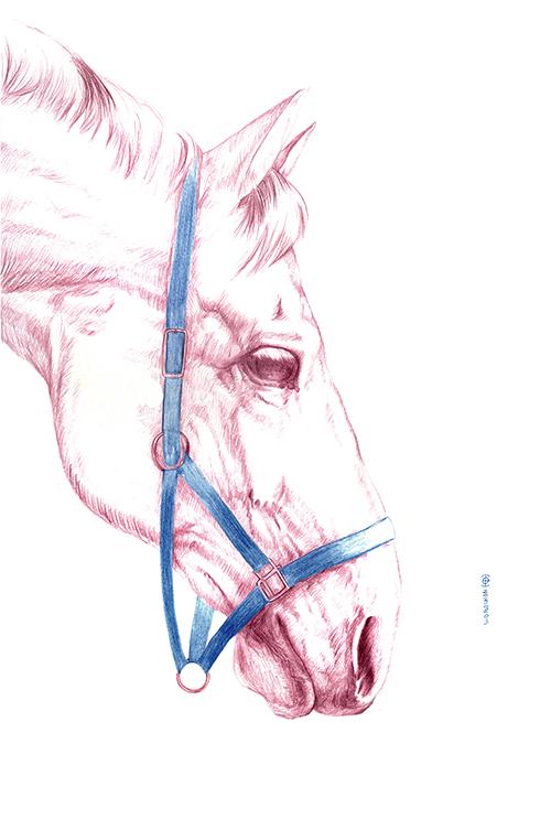 Horse Portrait Ⅱ