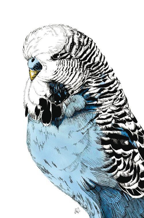 Eagle Portrait Ⅰ