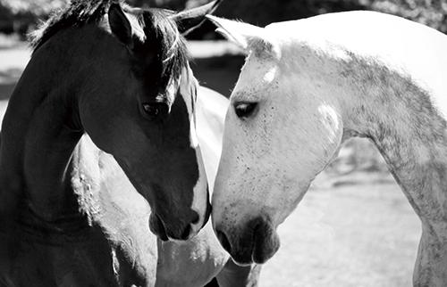 Beautiful horse Ⅱ