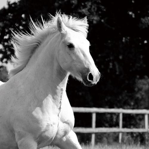 Rustic Horse V