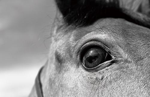 Beautiful horse Ⅰ