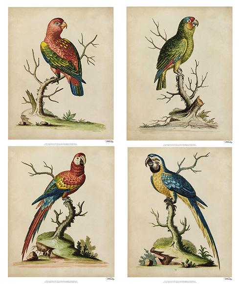 Edwards Parrots