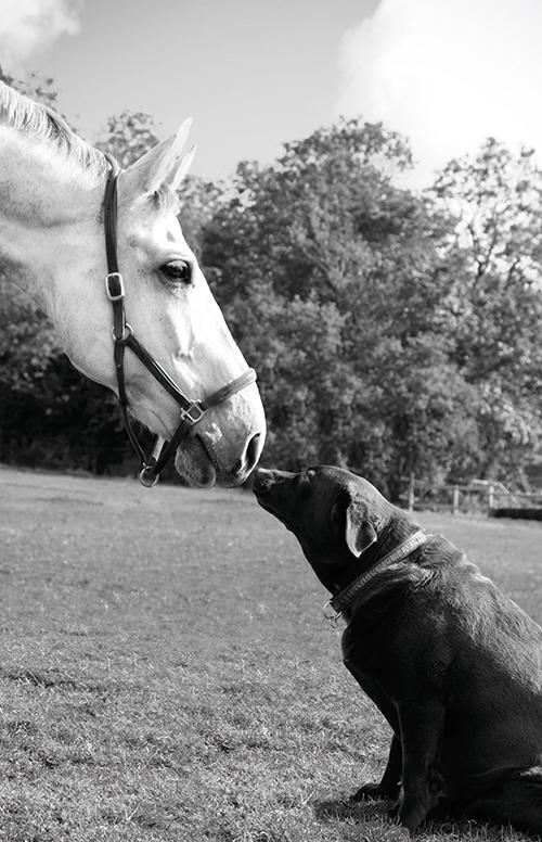 Beautiful horse Ⅴ