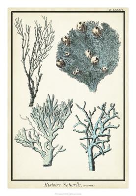 Coral Species II