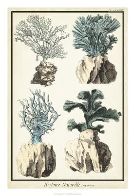 Coral Species III
