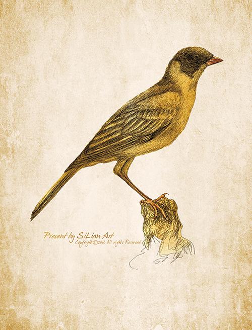 Lively Bird Ⅷ