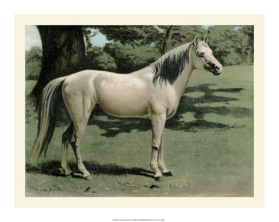 Cassell's Horse I