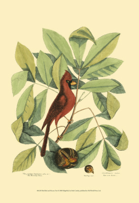 Baltimore Bird and Catalpah VI