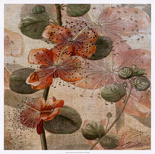 Desert Botanicals I