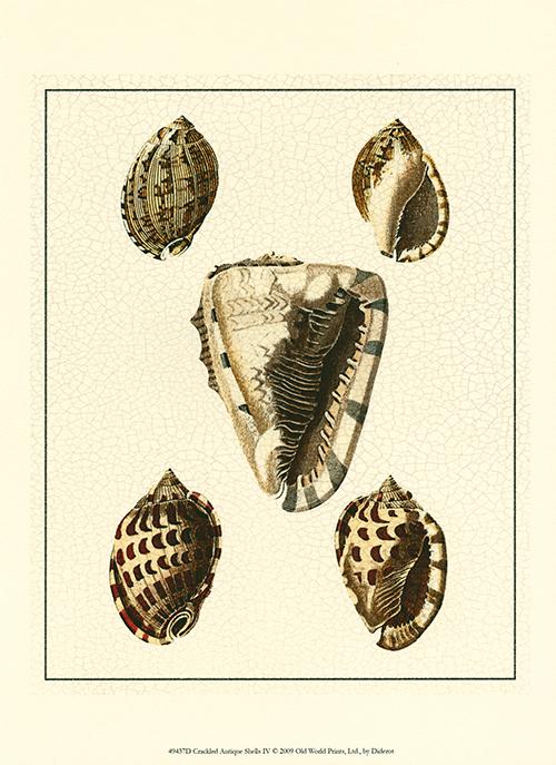 Crackled Antique Shells III