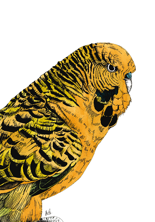 Tropical Parrot Ⅵ