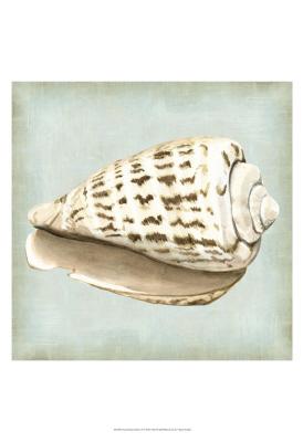 Sea Dream Shells II