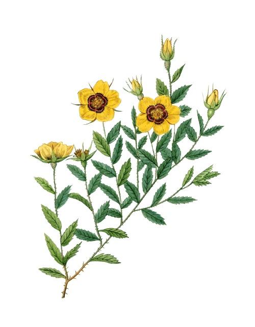 Bright Wild Flowers IV
